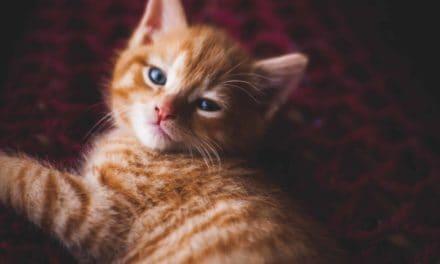 Most popular cat posts in 2017
