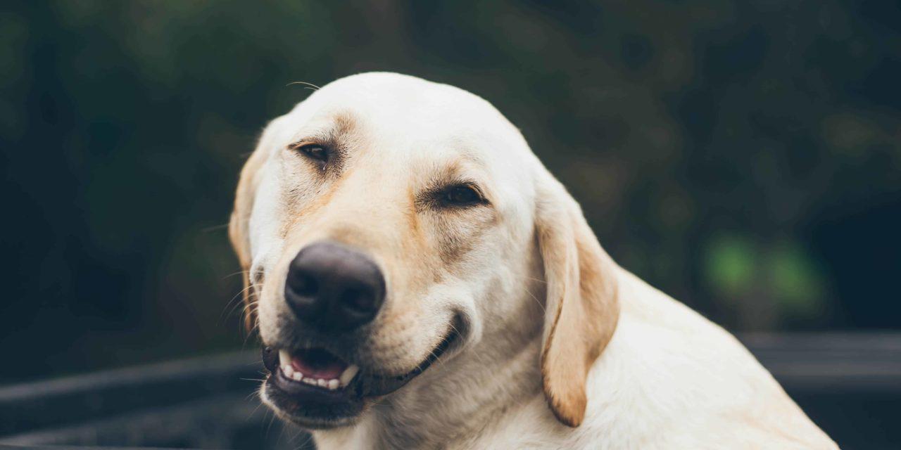Pet dental month 2018
