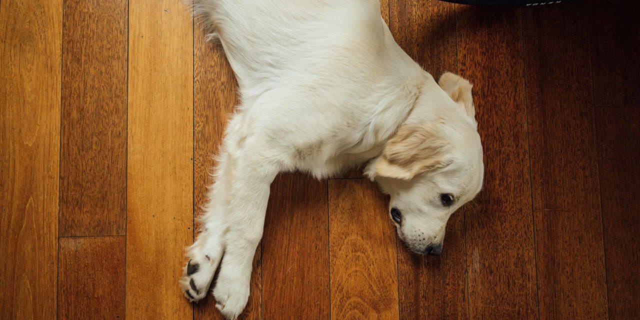 Lisa Lamond's 6 Tips for a fur free home
