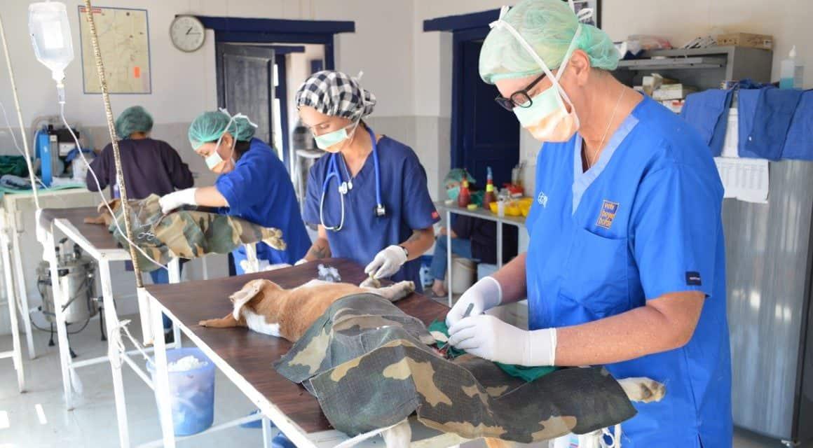 Vets Beyond Borders veterinary volunteers save lives
