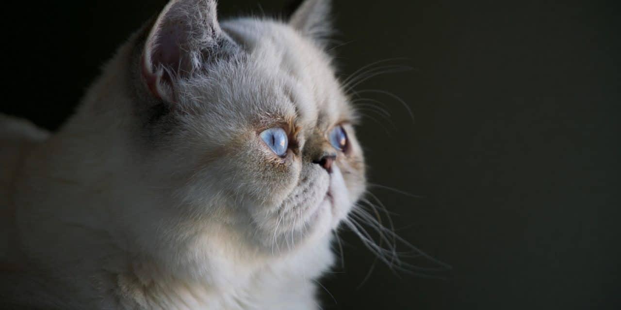 WSAVA Calls for health-conscious breeding of companion animals