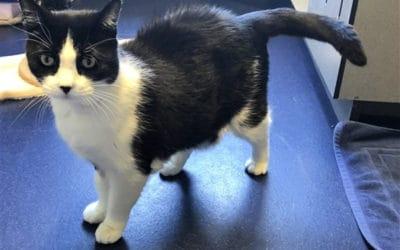 Adopt a 11 year old cat in Brisbane