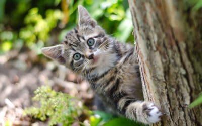 Vegan or vegetarian diet for cats