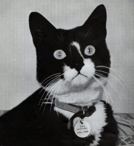 Wartime cat survived the sinking of 3 battleships