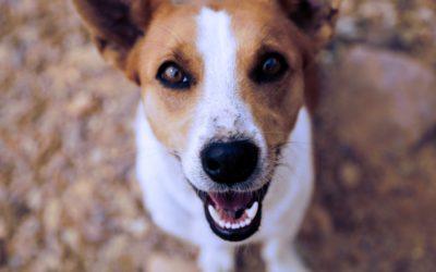 PETstock $1 million in grants for animal welfare groups