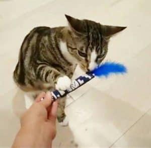 Cat Christmas Gifts handmade catnip toys