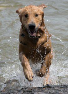 Protect your pets against bush fire smoke and heat stress. Photo: Marieke Koenders/Unsplash.com