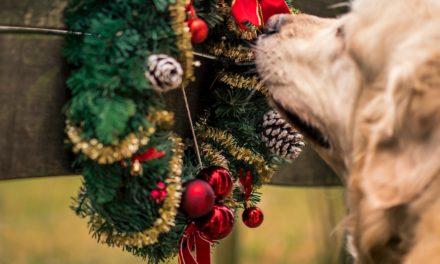 Pets4Life's picks for Dog Christmas Gifts