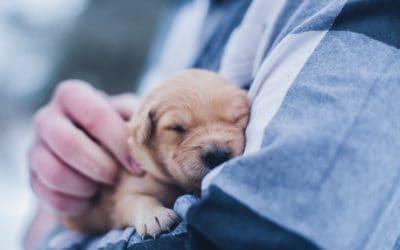 No evidence pets can spread coronavirus say Vets
