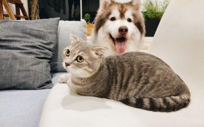 Pets and Coronavirus boredom busters at home