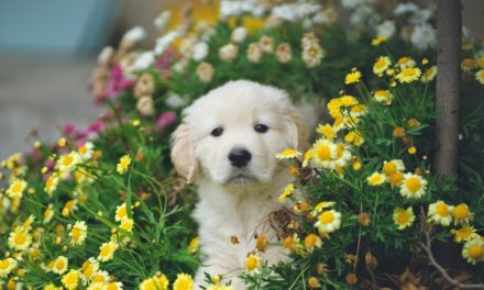 Spring pet care tips from PETstock VET Dr Alison Kemp