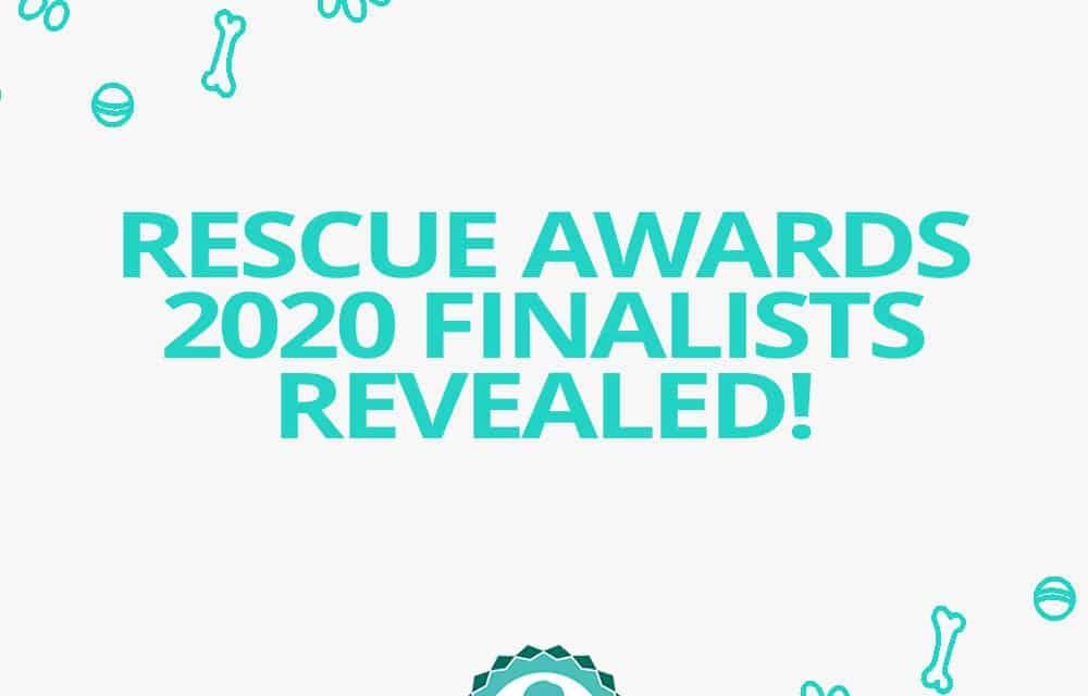 Jetpets Companion Animal Rescue Awards Finalists Revealed 2020