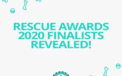Jetpets Companion Animal Rescue Awards Finalists Revealed 2020